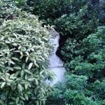 Une énigme dans un jardin
