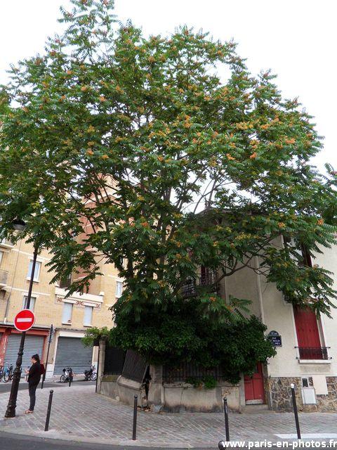 arbre rue moulin des prés
