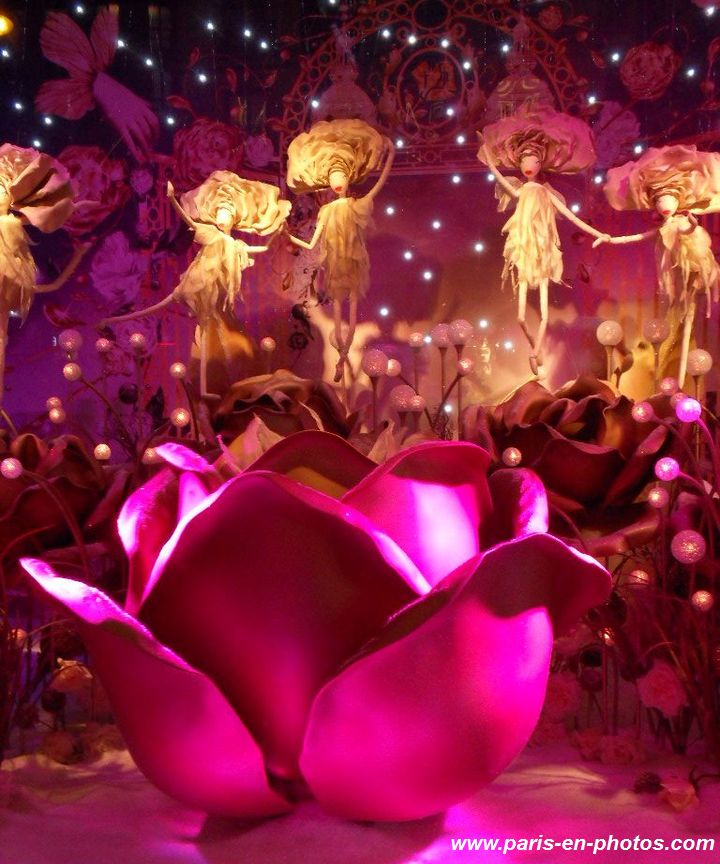 Roses vitrines Noël 2015